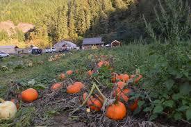 Pumpkin Patch North Bend Oregon by Pumpkin Patch U2014 The Marshfield Times