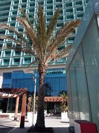 hotel meridien oran contact très beau jet d eau à l entrée de l hôtel picture of le meridien