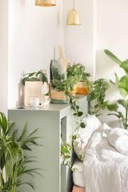 pflanzenliebe nachhaltige zimmerpflanzen jetzt auf