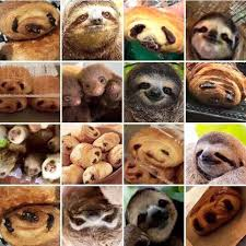 Sloth Or Croissant