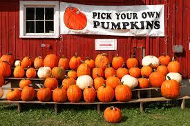 Apple Pumpkin Picking Syracuse Ny by Photo Gallery Critz Farms Syracuse New Times