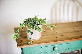 9 pflanzen die perfekt fürs schlafzimmer sind myhomebook