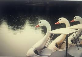100 Boat Homes Gracepoint On Twitter The Swan Boats Have Been