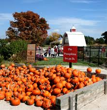Pumpkin Farms Illinois Goebberts by Travel Theme Getting The Picture