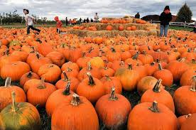 Pumpkin Patch Cleveland Mississippi by 11 Reasons Why October Is The Best