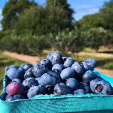 Christmas Tree Shop Middletown Ri by Sweet Berry Farm 56 Photos U0026 55 Reviews Fruits U0026 Veggies 19