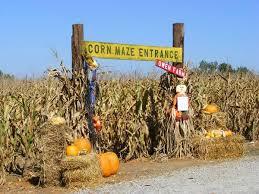 Colorado Pumpkin Patch Farm Camp by 185 Best Mazes Images On Pinterest Corn Maze Pumpkin Patches