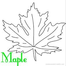Leaf Coloring Page Book At Wonderweirded Wildlife Maple To Print