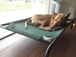 coolaroo dog bed petitudo