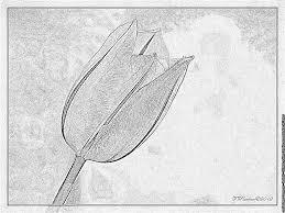 Tulipe 112 Nature Coloriages à Imprimer