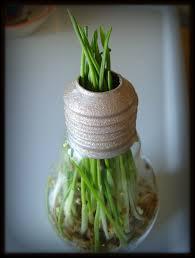 recycle those light bulbs craftykaya hommum