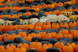 Pumpkin Patch Near Dixon Ca by Photo Essay Incredible Pictures Of Pumpkin Patches