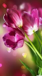 Wallpaperformobileorg 9400 Beautiful Flowers Wallpapers