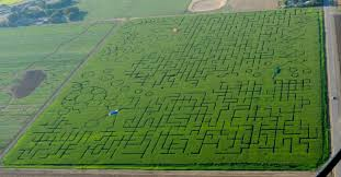 Wheatland California Pumpkin Patch by Best Corn Mazes Near Sacramento Cbs13 Cbs Sacramento