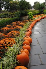 Wheatfield Pumpkin Patch by Fall Color In Your Landscape Pumpkins Gardening And Outdoor