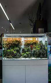 3932 Best Aquascapes Images On Pinterest | Aquascaping, Aquariums ... Aquascapes Unlimited Best Of Amazon Com Aquascape Micropond Kit 6 Amazoncom 58066 Stainless Steel Terwall Spillway Unique Opsixmailcom 3932 Best Images On Pinterest Aquascaping Aquariums 98948 Dry Beneficial Bacteria For Pond And Aquarilandschaften Gestalten Amazoncouk Oliver Rock Scape Aquascapez Aquarium Rocks Tutorial Natures Chaos By James Findley The Making Introduction To Red Cherry Shrimp