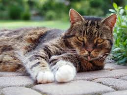 signs of worms in cats 10 simple home remedies for worms in cats