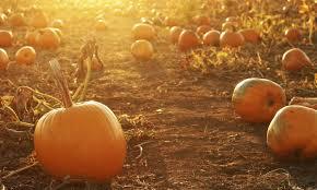 Best Pumpkin Apple Picking Long Island Ny by 7 Places For Long Island Pumpkin Picking Long Island Pulse Magazine
