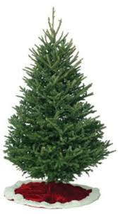 Fraser Christmas Tree Care by Fresh Cut Christmas Trees And Garland