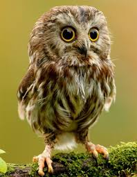 I Want An Owl As A Pet Too So Cute