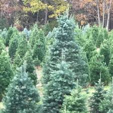 Frasier Christmas Tree Cutting by Dutchess County Here Are The Best Places To Cut Your Own