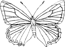 Butterfly Htm Ideal Coloring Book Pages
