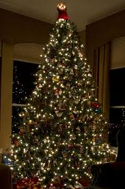 Slim Pre Lit Christmas Trees by 28 12 Ft Christmas Tree 12 Ft Wimberly Spruce Quick Set