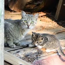 Cute Ragdoll Kittens For Sale In Colorado