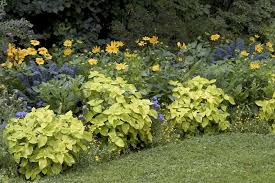 Flowers For Flower Beds by Low Maintenance Garden Tips U2013 Ideas And Plants For Easy Gardening