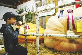 Largest Pumpkin Ever Carved by State U0027s Record Setting Pumpkin Weighs In At More Than One Ton