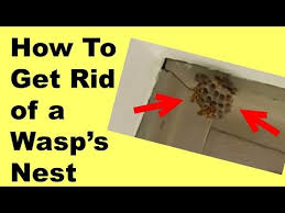 how to get rid of a wasp s nest and kill the wasps so easy