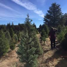 Santa Cruz Ca Christmas Tree Farms by Crest Ranch Choose U0026 Cut Christmas Trees 16 Photos U0026 22 Reviews