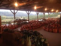Pumpkin Patch Near Greenville Nc by A Guide To The Top Pumpkin Patches Near Atlanta