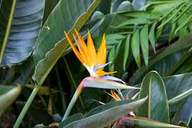 Good Plants For Bathrooms Nz by The Best Plants For Swimming Pool Landscaping