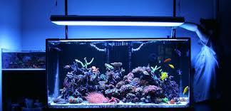 t5 fluorescent light fixtures aquarium bulbs single fixture ho