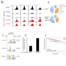 A Carrierassisted ChIPseq Method For Estrogen Receptorchromatin