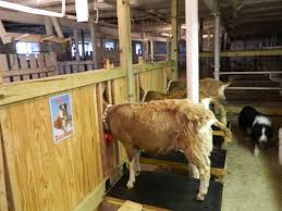 Livestock Loafing Shed Plans by Welcome To The Farm Swiss Frau Farm Products