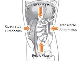 pelvic floor weakness impacts more than you think buffalo rehab