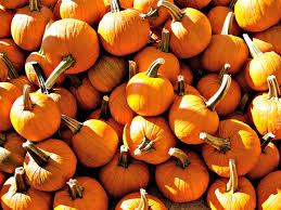 Pumpkin Patch Massachusetts by For The Love Of Autumn