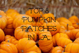 Pumpkin Picking Pa by 8 Best Family Friendly Pumpkin Patches In L A We Design La