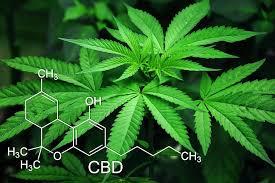 weedbox cannabis oktober 2019