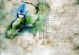 consalnet vliestapete vogel vintage 312 x 219 cm