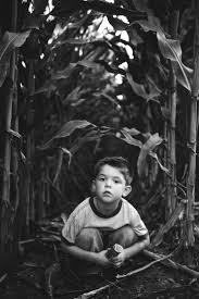 Kristins Pumpkin Patch Springfield Il by Best 25 Corn Field Pictures Ideas On Pinterest Senior Pics