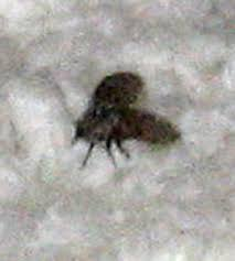 Little Flies In Bathroom Drain by Bathroom Fly What U0027s That Bug