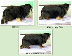 My Short Haired Dog Sheds A Lot by Pet Grooming The Good The Bad U0026 The Furry Grooming A Pekingese