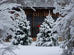 Leyland Cypress Christmas Tree Growers by News Erskine Edu Stowes Sell Christmas Trees And More At Family Farm