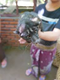 The Civet Cat
