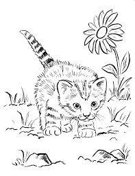 Cat Coloring Pages For Adults Free Kitten Page