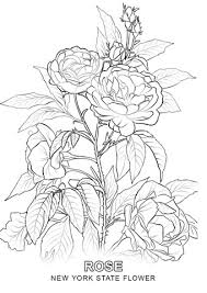 Click To See Printable Version Of New York State Flower Coloring Page