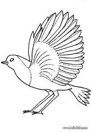 Robin Coloring Page Nice Bird Sheet More Original Content On Hellokids